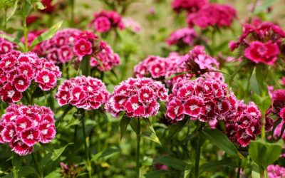 Kukkaniityn perustaminen ja hoito