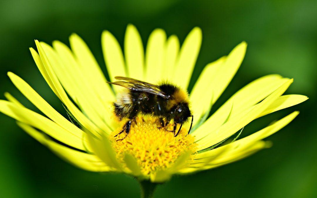 Kylvä kukkaniitty – autat elintärkeitä pölyttäjiä